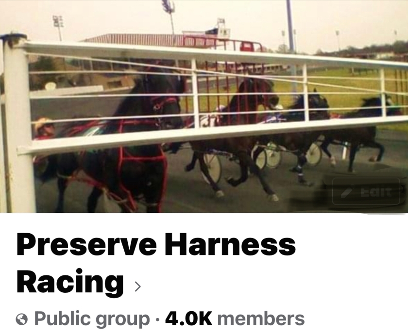 Harness racehorsses behind the starting gate